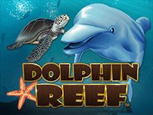Игровой видеослот Dolphin Reef